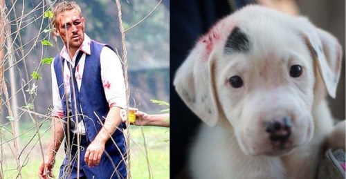 ryan gosling puppy
